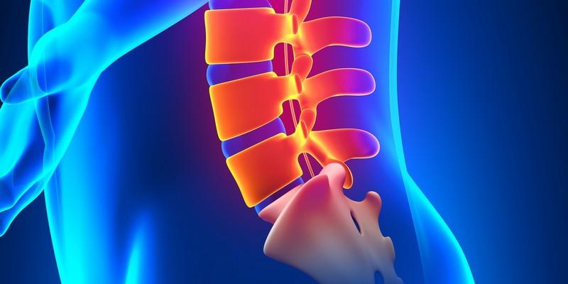 Retraites Spine L1 L2 L3 L4 L5 Vertebra What Is It